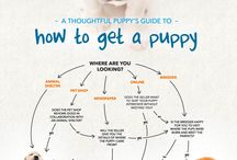 Infographics About Dogs / Infographics about dogs / by Dogs N Pawz