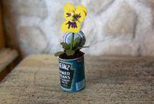 plantas mini