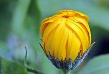 Consigli per Preparare il tuo Giardino all'Inverno / Finita l'estate il tuo bel giardino rigoglioso inizierà ad appassire. L'erba scolorirà a poco a poco, le verdure smetteranno di maturare e sembrerà giungere il decadimento delle tue piante. A rammaricarsi sono soprattutto gli amanti del pollice verde. Ma non c'è da preoccuparsi: non è un addio. Ecco alcuni semplici consigli per preparare il tuo giardino all'inverno!