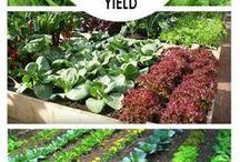 grow your food
