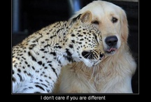 Love, Laughter & Silliness of the Fur Kind