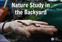 Homeschool Nature Study / by Dr. Dolly Garnecki