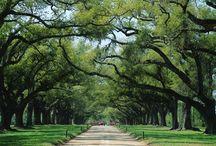 South Carolina / by Amber Jackman