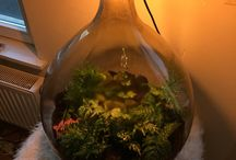 Closed terrarium ecosystem