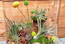 Home gardens / Home gardens in terrariums, glass or other containers. Unusual arrangements of plants.