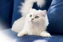 Cute Cats / by Kathy Ni