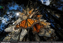Butterflies / by Dolores Thorpe