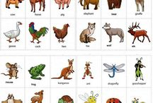 Animals vocab