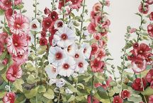 Hollyhocks / Plants