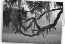Louisiana  / by Sandy Mosley