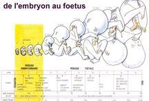 Bébé / maternité