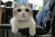 My Cat SSS / Benim güzel kediciklerimmmm :))