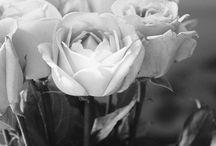 Color Me ♥ Black & White