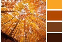 Orange you glad it's fall?