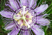 flower / by Paul Murray