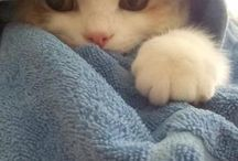 Kitties / Pics & quotes of kitties...cats & kittens. / by Lisa Wright
