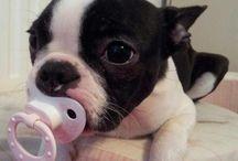 Cute Dog's  / by Jody Souza