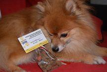 Hunde / cani im Hotel Sonja / Pinnwand über unsere Vierbeinigen Gäste - Foto dei nostri cari ospiti a 4 zampe