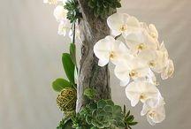 Blomster til stuen