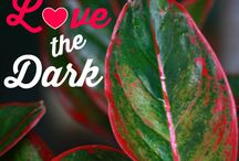 plants.that love.the dark