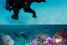 Andaman Islands Tours / Andaman Islands Tours - Custom made Private Guided Luxury Tours in India - Heart and Soul Holidays in India - http://toursfromdelhi.com/