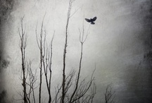 """""""If I had to Choose, I Would Rather Have Birds Than Airplanes."""" / by Jordan Turcotte"""