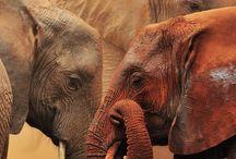 слоны.мои