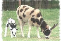 Sheep. Sheep, Sheep / by The Woolery