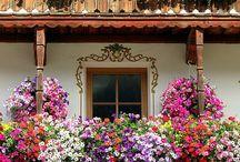 Çiçek ev