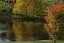 Autumn colours at Mali Brae Farm