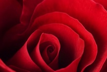Close Up: Flowers