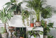 Greenery / Plants, Outdoors indoors