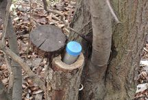 geocache ideas