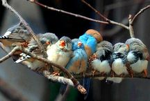 Feathered Friends / by Alice Hartman