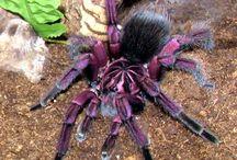 Krásní pavoučci