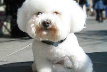 Barney Dogs