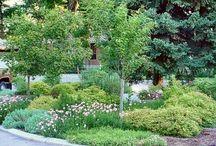 Záhrada,pestovanie,kvety