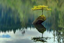 Tremendous Trees  / by Allison Parrish