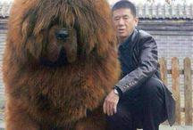 Grote dieren