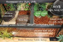 turtle tables