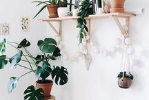 Deco plantad