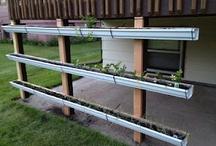 Planten in regenpijp