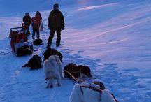 Arktis / Reiseinspiration Arktis
