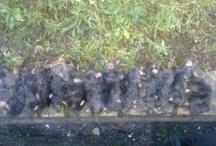 pest Control'MOLES/RABBIT' / Mole/Rabbit Control