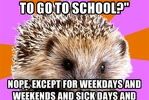 Homeschool Life / Musings on homeschooling.