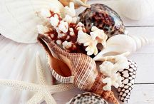 Ракушки, морские звезды