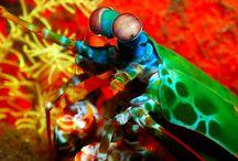 Amazing Sealife / by Jade Feuerbacher