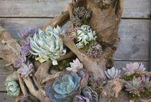 Blomster Dekor