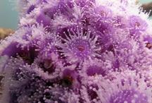 Kingdom Animalia: Coral
