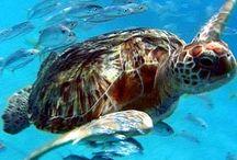Turtles / by Jeana Wellman